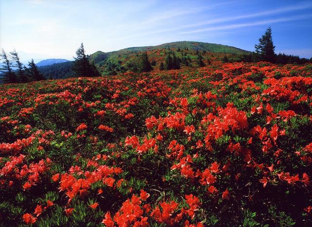 レンゲツツジの咲く風景 鉢伏山