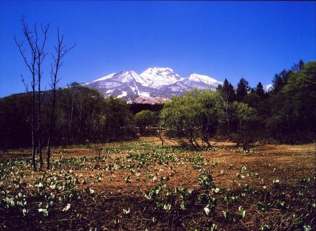 水芭蕉の咲く風景(妙高高原)