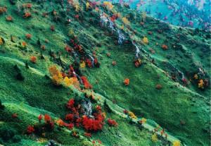 志賀高原の秋
