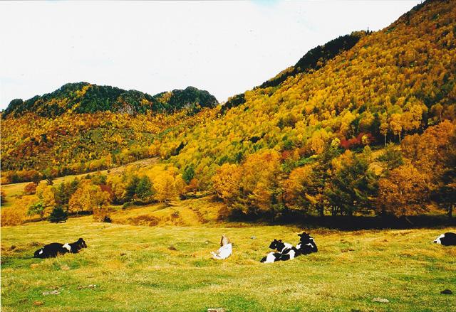 志賀高原の秋 山田牧場