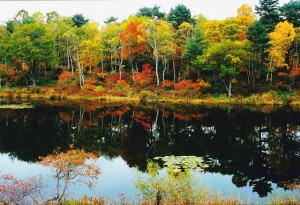 志賀高原の秋 一沼