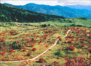 志賀高原の秋 芳ヶ平