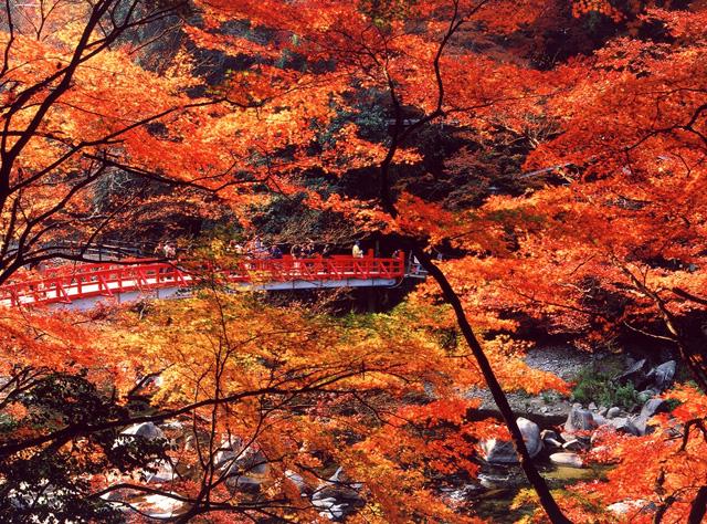 香嵐渓の秋