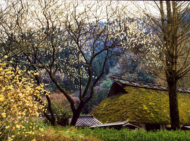 香嵐渓の春